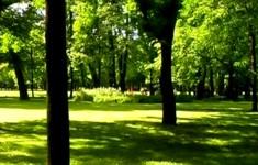 Парки и сады. Сад у Михайловского дворца