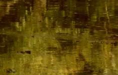 Колонны. Молвинская колонна