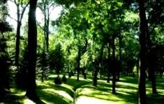 Парковые Павильоны. Петергоф. Павильон Эрмитаж