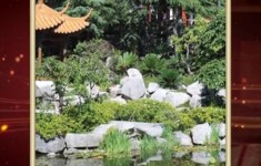 Сад. История третья