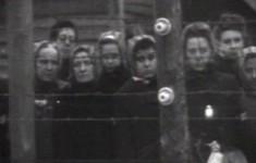 Нацистский новый порядок и коллаборационизм