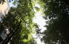 От метро ул. 1905 года до Ваганьковского кладбища и через Малую Грузинскую к дому музею им. Тимирязева